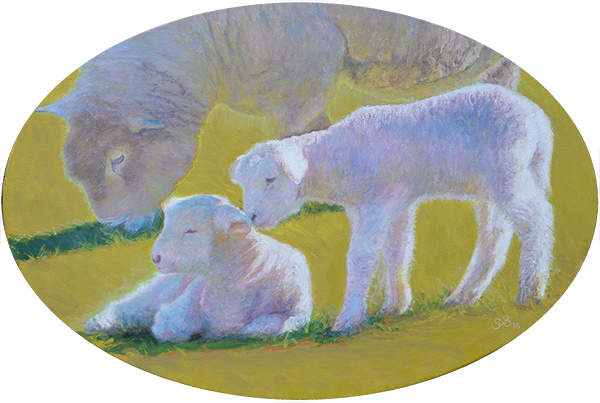 Lambs of Ross No. 8